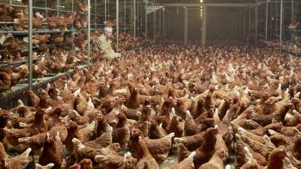 Granja de gallinas