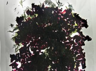 ´Beet with Onions, Anchovy, Fennel and Balsamic Vinegar´
