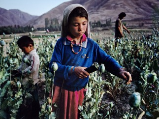 CHILDREN WORK IN OPIUM FIELD IN BADAKHSHAN, 1992