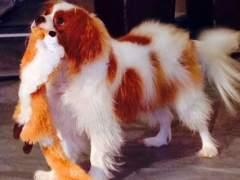 Bentley, perro de Nina Pham