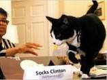 'Socks', el gato de la familia Clinton