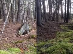 Video del bosque que 'respira' en Nueva Escocia